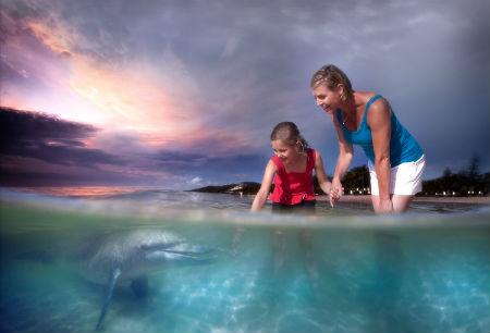 dolphin feeding at dusk, Tangalooma resort