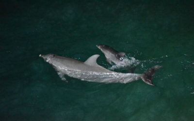 A new arrival and other news from Tangalooma Island Resort
