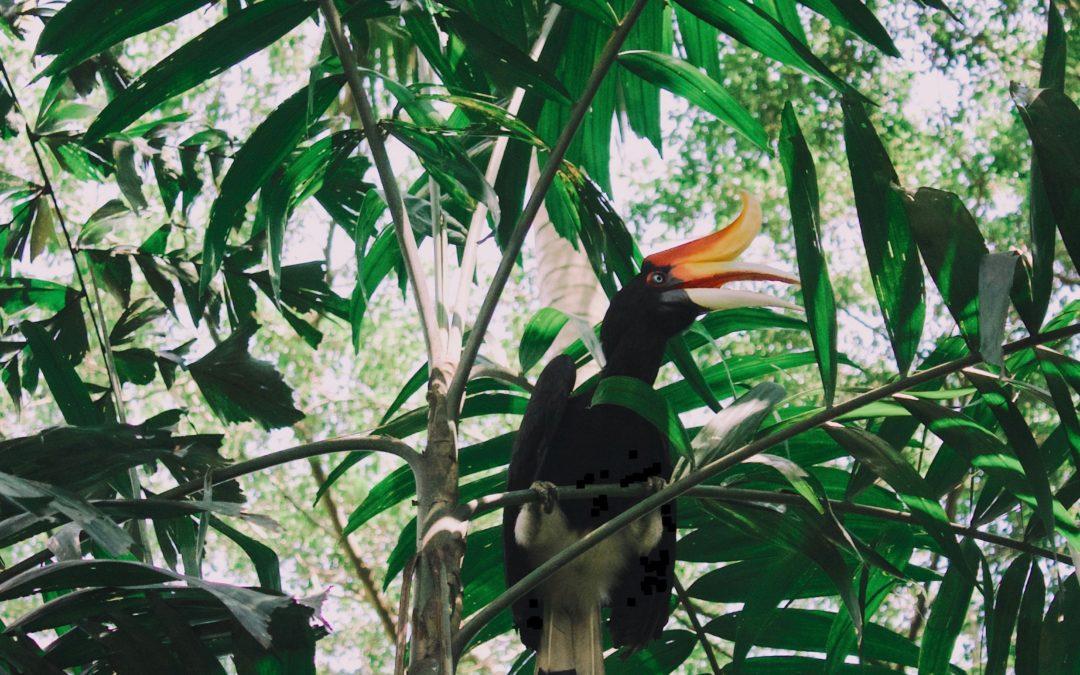 Bird Watching Activity at Rayavadee